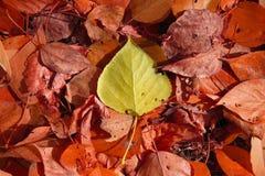 Tło spadać, jesień liście Fotografia Royalty Free