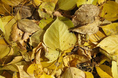 Tło spadać, jesień liście Obrazy Stock