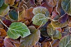 Tło spadać liście zakrywający z hoarfrost zdjęcie royalty free