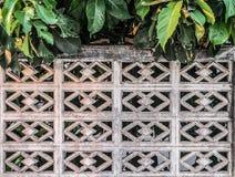 Tło stara ściana z cegieł tekstura z rośliną & drzewem Zdjęcie Stock