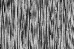 Tło susi badyle trzciny zbliżenie Zdjęcia Royalty Free