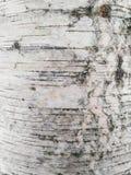 tło szczegółów tekstury okno stary drewniane Obraz Royalty Free