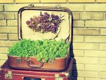 tło szczegółów tekstury okno stary drewniane Stary retro rocznik walizek valise na drewnianych deskach Zbieracki zgromadzenie w s Zdjęcie Royalty Free