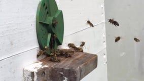 Tło sześciokąta tekstura, wosku honeycomb od pszczoła roju wypełniał z złotym miodem zdjęcie wideo
