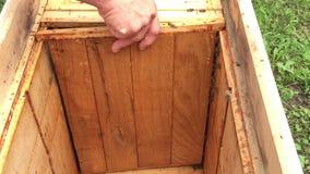 Tło sześciokąta tekstura, wosku honeycomb od pszczoła roju wypełniał z złotym miodem zbiory wideo