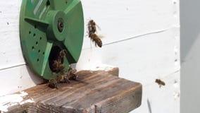 Tło sześciokąta tekstura, wosku honeycomb od pszczoła roju wypełniającego zbiory