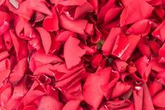 tło szeregu różane kwiecistych płatków obraz royalty free