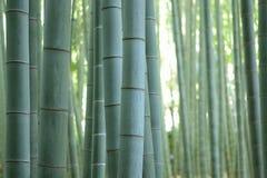 Tło tekstura japończyk zieleni bambusa las Zdjęcie Stock
