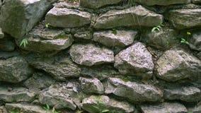 Tło tekstura kamienna ściana z trawą i mech zdjęcie wideo