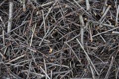 Tło tekstura rozsypisko łamany drzewo zdjęcia royalty free