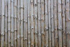 Tło tekstura stary popielaty drewniany ogrodzenie od całych bel z kępkami Podławy ogrodzenie fotografia royalty free