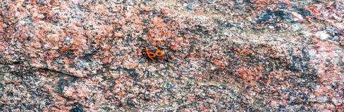 Tło tekstura, wzór Granit tafluje stawiać czoło miasta bui obraz royalty free