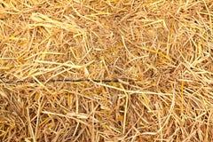 tło tekstura złota słomiana Zdjęcie Stock