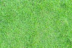 Tło tekstura z przestrzenią dla pisać świeże trawa zieleni vi Fotografia Royalty Free