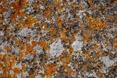 Tło tekstury Kamienny tekstury zakończenie z kolorowymi punktami Zdjęcie Royalty Free