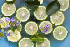 Tło tekstury natury kaffir wapna plasterka pławik na wodzie obrazy royalty free