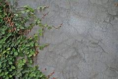 tło tekstury stara ceglana ściana Obraz Stock