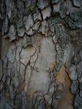 tło tekstury szczekać drzewo Obraz Royalty Free