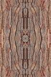 tło tekstury szczekać drzewo Zdjęcie Royalty Free