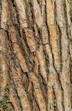 tło tekstury szczekać drzewo Skóra barkentyna drzewo który tropi łupanie Obraz Stock