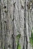 tło tekstury szczekać drzewo Skóra barkentyna drzewo który tropi łupanie Zdjęcia Stock