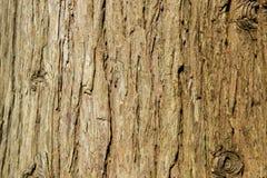 tło tekstury szczekać drzewo Skóra barkentyna drzewo który tropi łupanie Zdjęcia Royalty Free