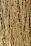 tło tekstury szczekać drzewo Skóra barkentyna drzewo który tropi łupanie Obrazy Stock