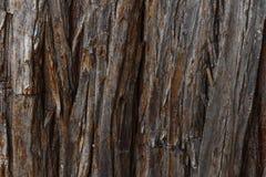 tło tekstury szczekać drzewo Skóra barkentyna drzewo który tropi łupanie Fotografia Royalty Free