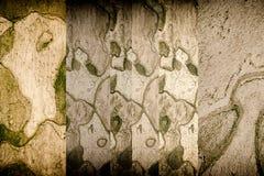 tło tekstury szczekać drzewo Skóra barkentyna drzewo który tr Zdjęcia Stock