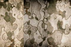 tło tekstury szczekać drzewo Skóra barkentyna drzewo który tr Fotografia Stock