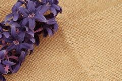 Tło textured brown bawełniana tkanina obrazy stock