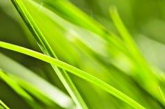 tło trawy zieleń Obraz Royalty Free