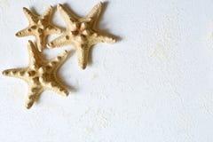 Tło trzy rozgwiazdy w kącie Obraz Stock