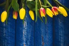 Tło tulipanów wiosny kwiatu drewniany błękit Zdjęcie Stock