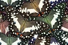 Tło tworzący od motyla Obrazy Stock