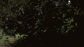 Tło ustanawia strzał parkową noc 01 zbiory wideo