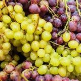 tło winogron kształtu lfloral wektora Organicznie Dojrzały czerwieni i białego winogrono przy rynkiem Obraz Royalty Free