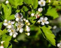 tło wiosna czereśniowa target748_0_ kwiatonośna uradowana trybowa Zdjęcia Stock