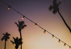 Tło wizerunek sznurków światła Przed drzewkami palmowymi przy słońcami fotografia stock