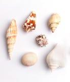 tło wysoki był ścinku inkasowy szczegół znajdujący mój ścieżki fotografii portfolio postanowienia seashell biel Zdjęcie Stock