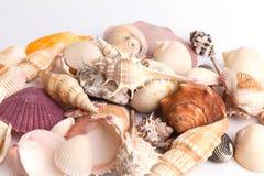 tło wysoki był ścinku inkasowy szczegół znajdujący mój ścieżki fotografii portfolio postanowienia seashell biel Obrazy Stock