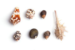 tło wysoki był ścinku inkasowy szczegół znajdujący mój ścieżki fotografii portfolio postanowienia seashell biel Zdjęcie Royalty Free