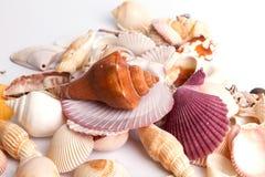 tło wysoki był ścinku inkasowy szczegół znajdujący mój ścieżki fotografii portfolio postanowienia seashell biel Obraz Royalty Free