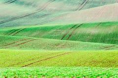 Tło, wzór z krzywami falisty kołysanie się/textured wiejskiego fi Obrazy Stock