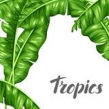 Tło z bananowymi liśćmi Wizerunek dekoracyjny tropikalny ulistnienie royalty ilustracja