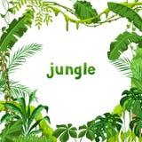 Tło z dżungli roślinami ilustracji