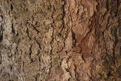 Tło z drewnianą teksturą Obrazy Stock