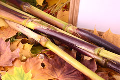 Tło z jesień liśćmi i drewnianą ramą Fotografia Stock