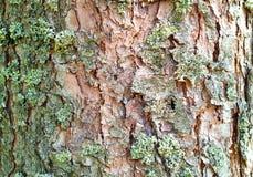 Tło z mech od barkentyny naturalny drewno, pojęcie naturalne tekstury, zakończenie, przestrzeni kopia, Obraz Royalty Free