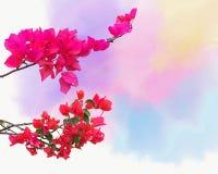 Tło z ornamentacyjnym pięcie rośliny bougainvillea okwitnięciem Zdjęcie Royalty Free